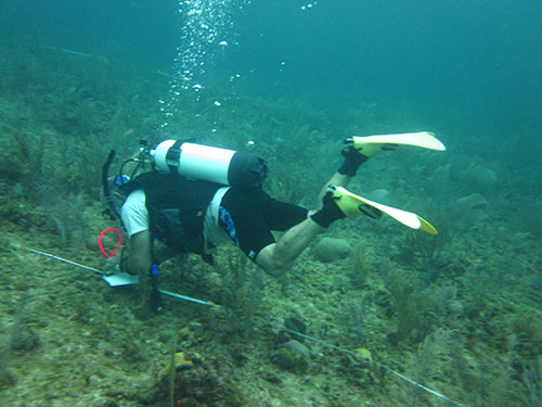 Doing a survey underwater
