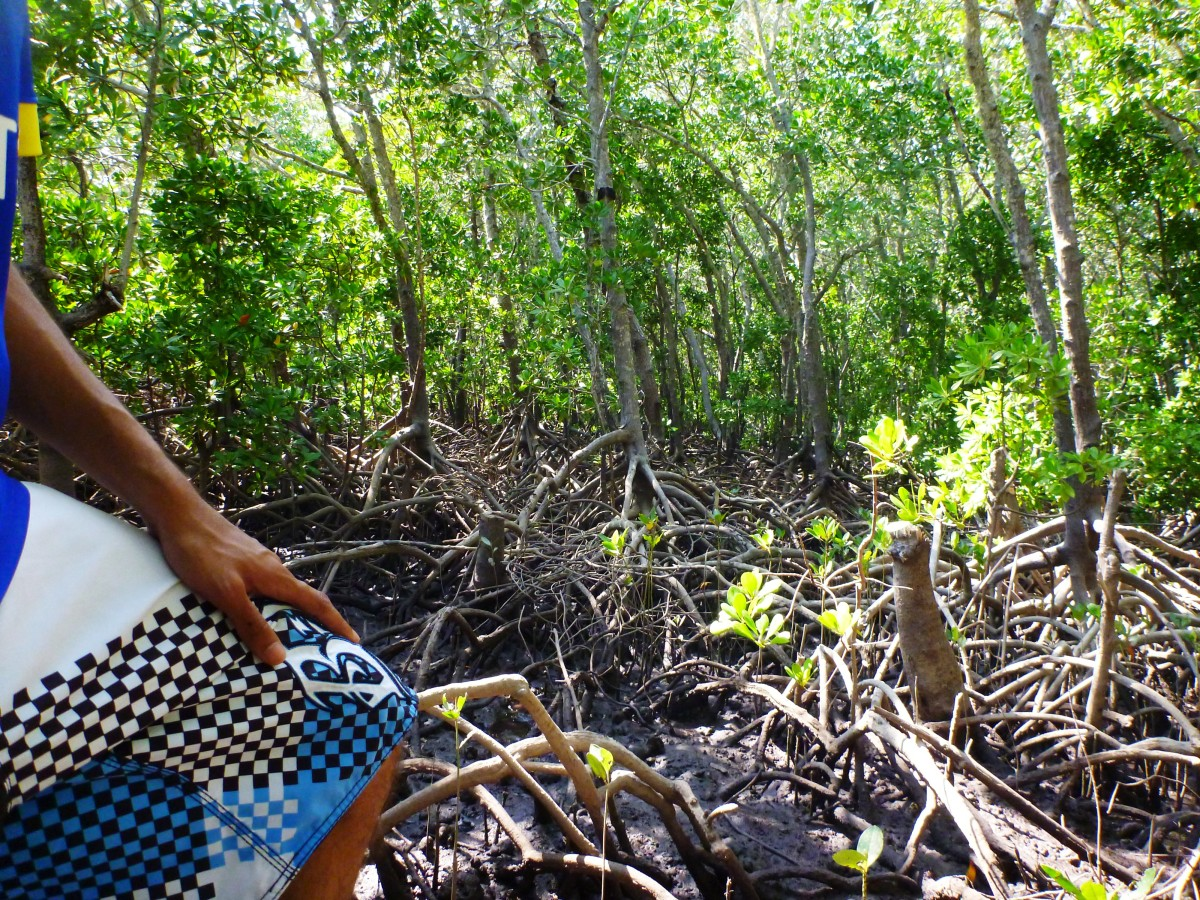 My first taste of mangrove forest. An incredible environment but not an easy one to traverse!